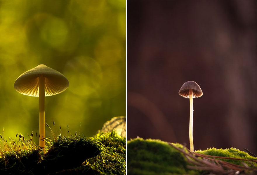 an-incredible-world-of-mushrooms-16