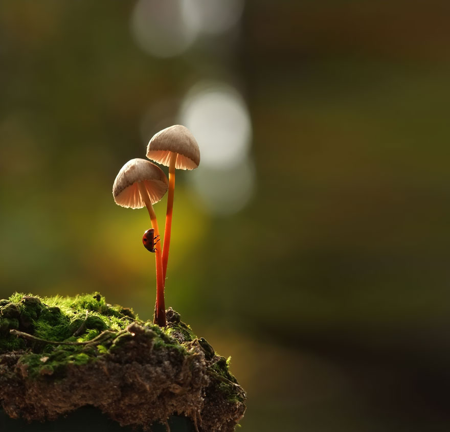an-incredible-world-of-mushrooms-4