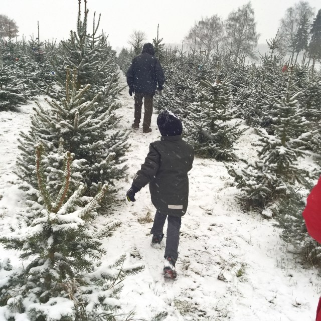 BUMCHEN  Weihnachtsbaum erfolgreich mit Oma ausgesucht und uns danachhellip
