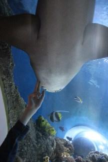 Sealife Konstanz, Bodensee mit Kind