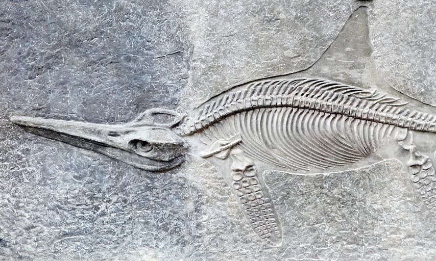 Wandern in die Welt der Dinos: Fischsaurier in der Glasenbachklamm