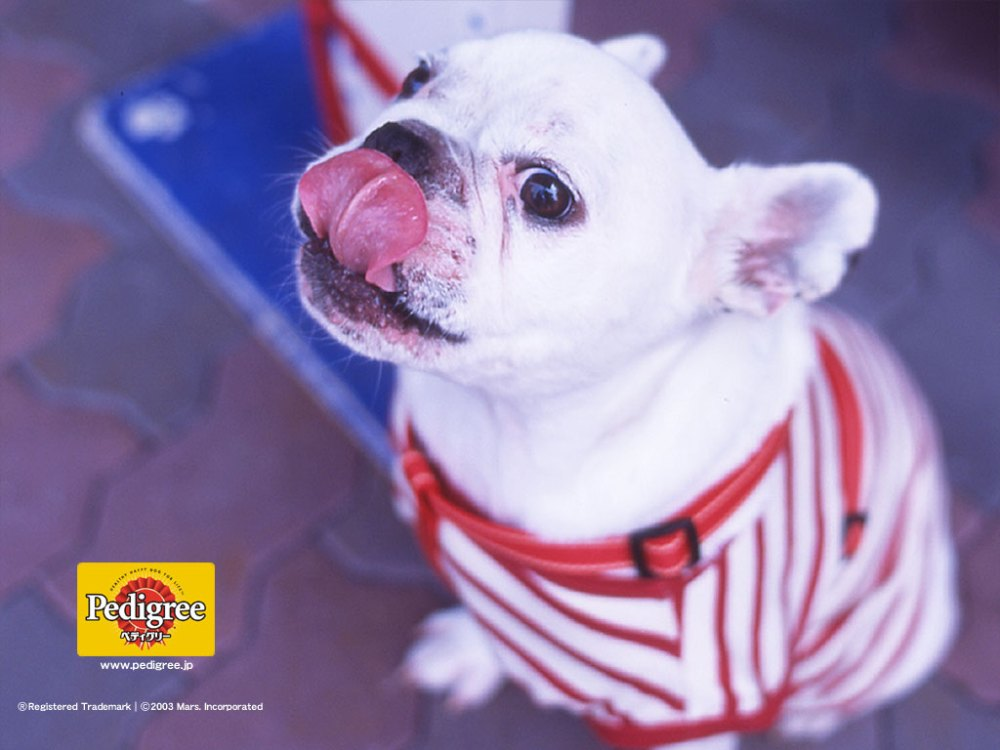 6 More Dog and Puppy wallpapers from Pedigree (2/6)