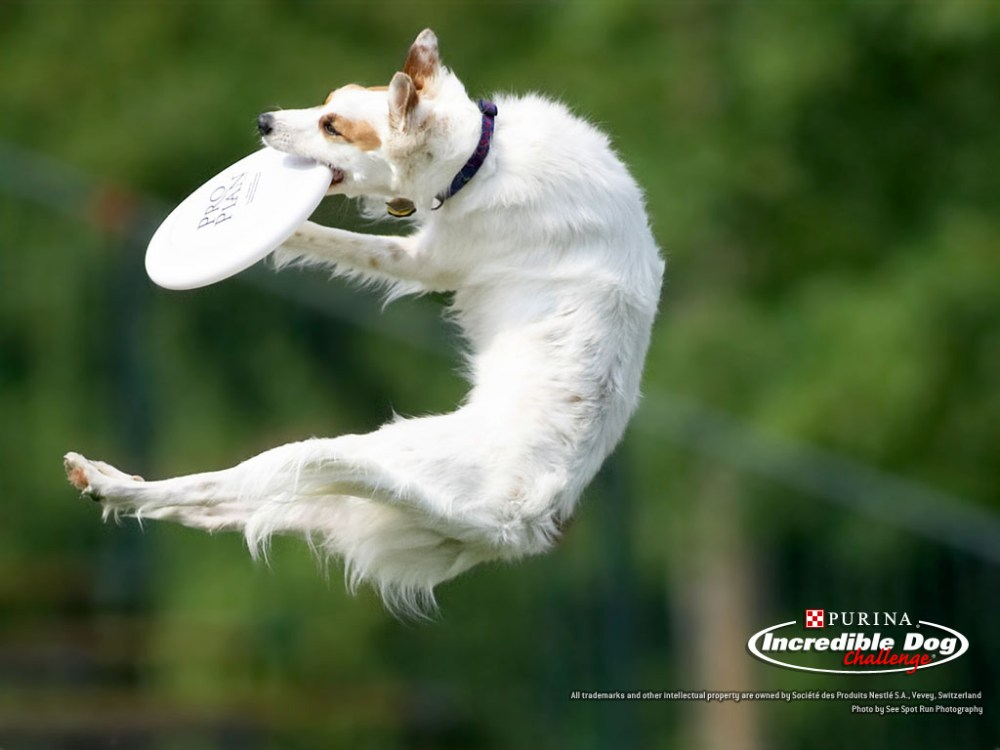 Fly boys! 4 Action Dog Wallpapers by Purina! (4/4)