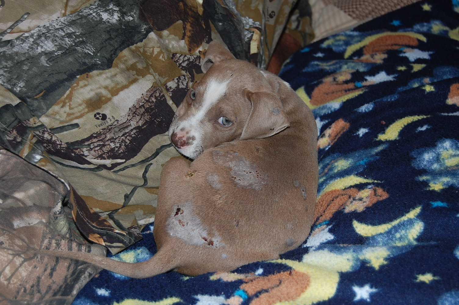 In addition to a broken pelvis, Trooper has many wounds and injuries.