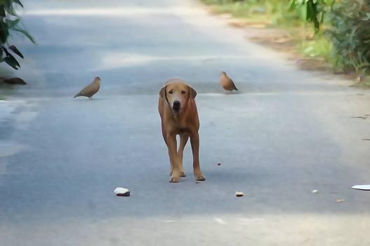 كلب في بورتوريكو
