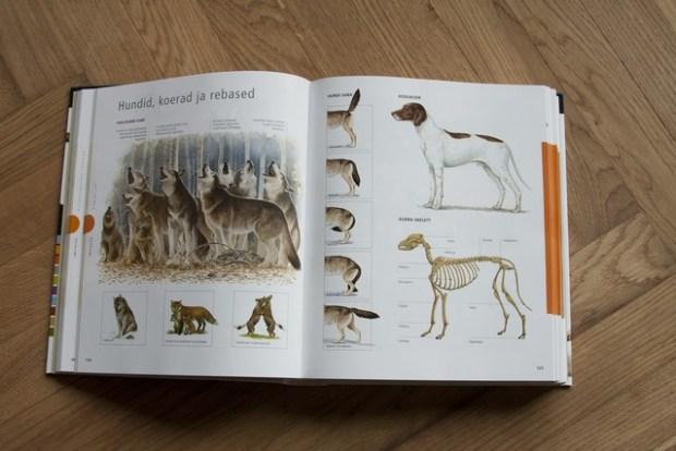 raamatud loomadest_045_v