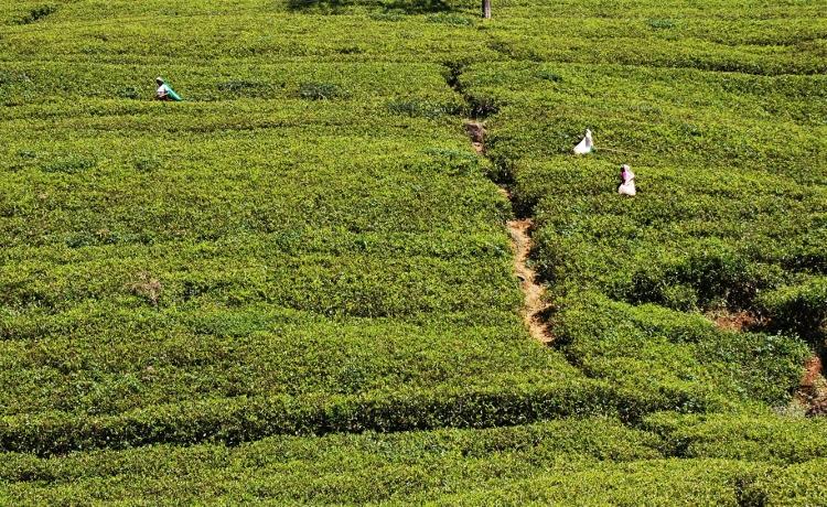 sri lankan hill country