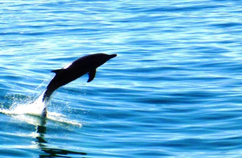 Aamu-uinti delfiinien kanssa Australiassa