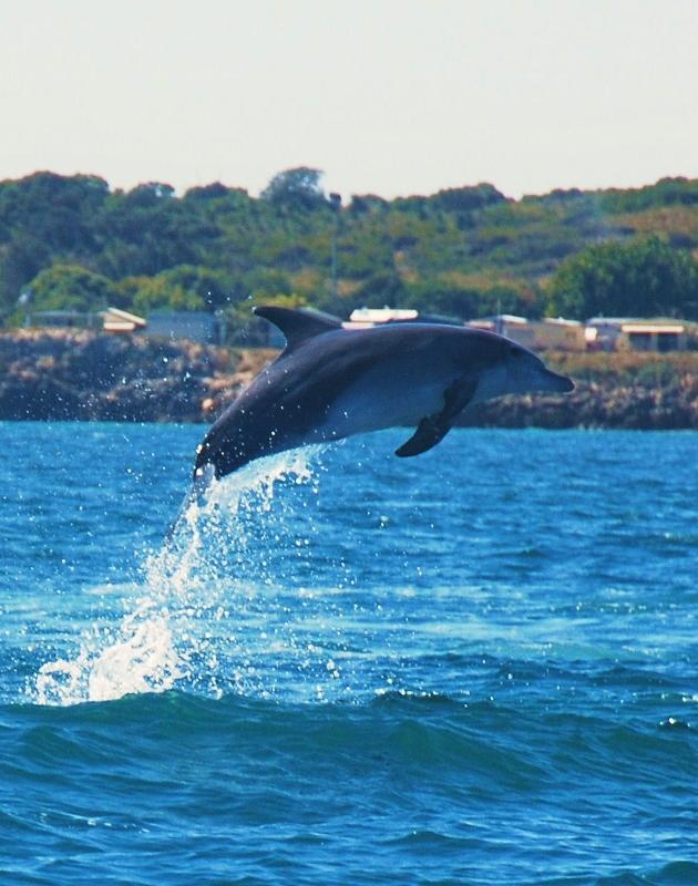 swim with dolphins western australia