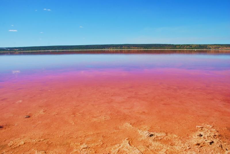 pinkki järvi western australiassa