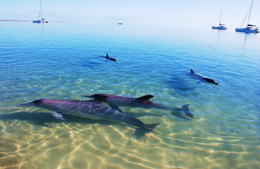Delfiinirakkautta Monkey Miassa
