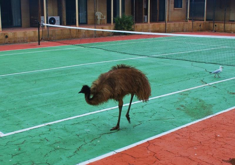 Emu tenniskentällä