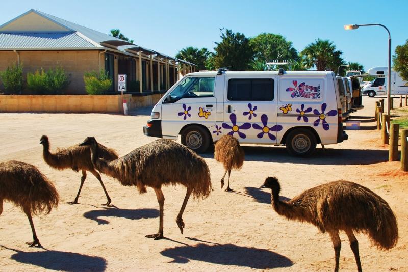 Monkey Mian emut