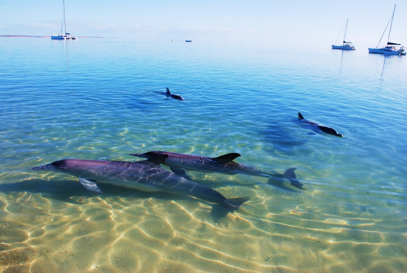Monkey Mian delfiinit