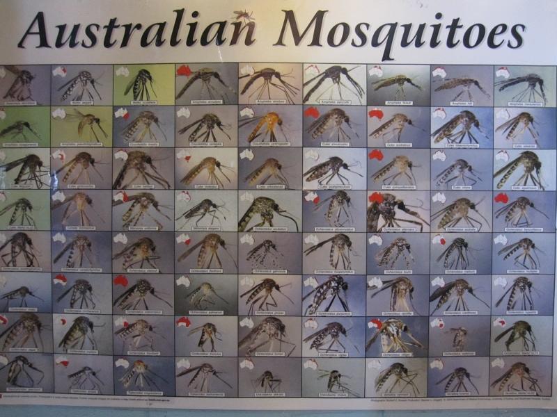 Australian hyttyset