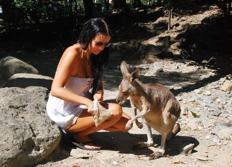 Kenguruiden syöttämistä Cairnsin eläintarhassa