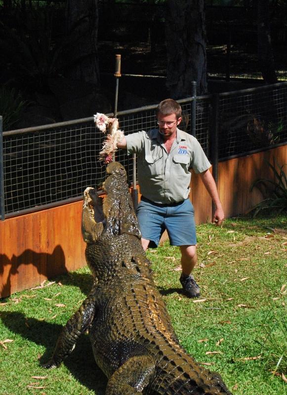 Krokotiilimies Cairnsin eläintarhassa