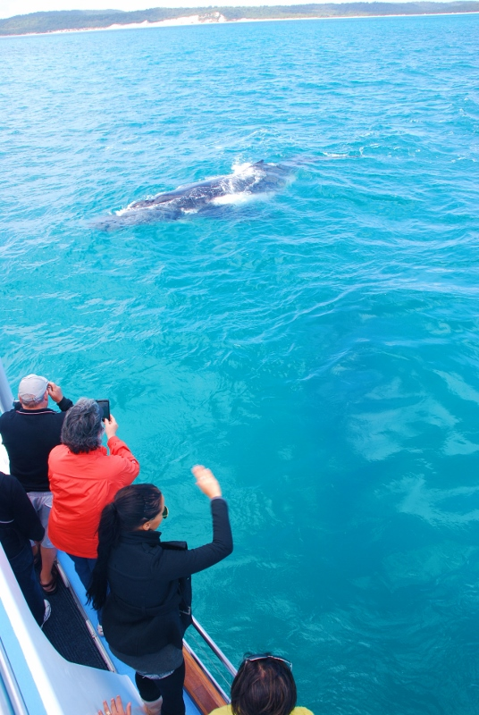 valaita Hervey Bayssä