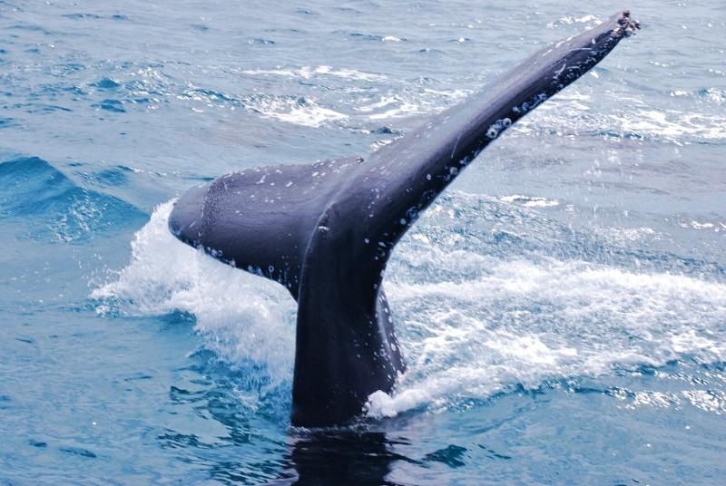 Hervey Bayn valaita