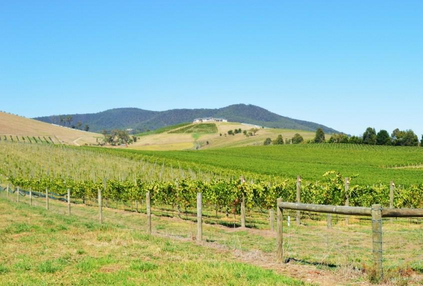 Yarra Valleyn viinitiloja