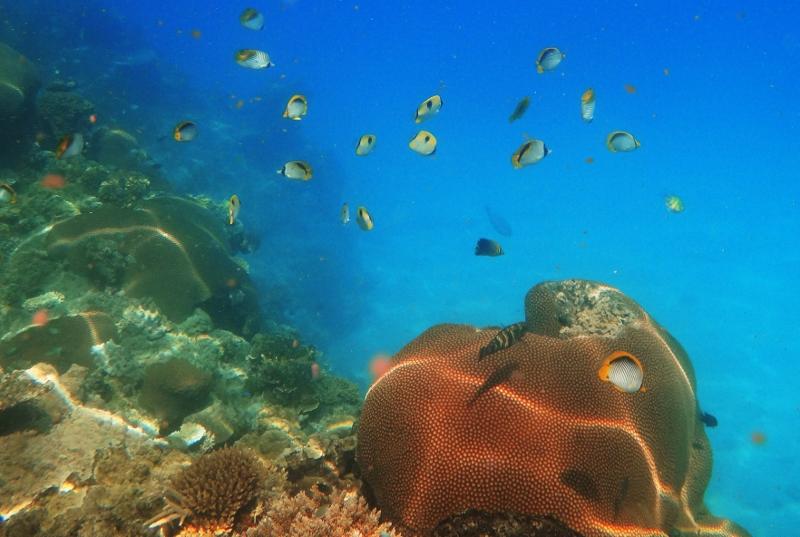 Koralleja Fidzillä
