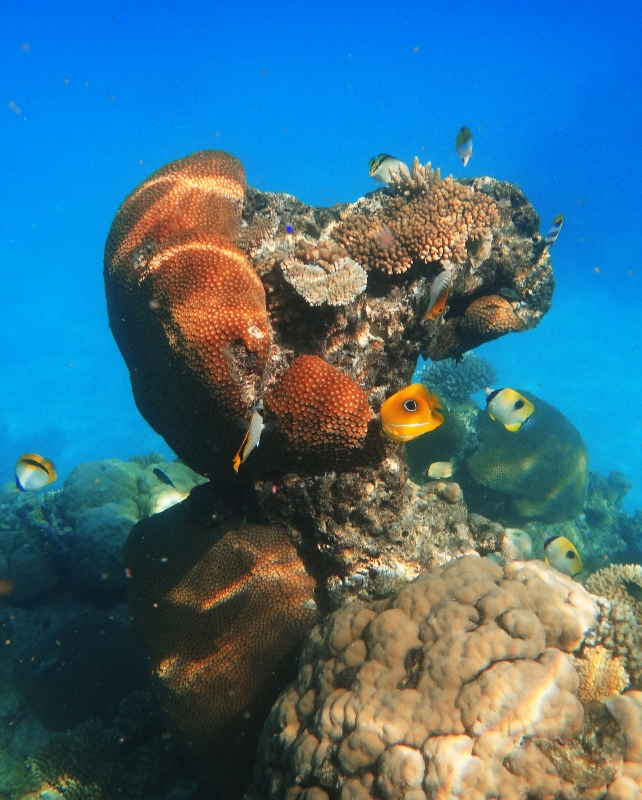 Koralleja