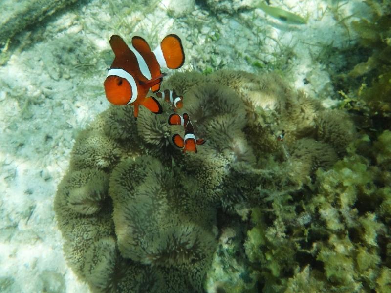 Snorklausta Filippiineillä