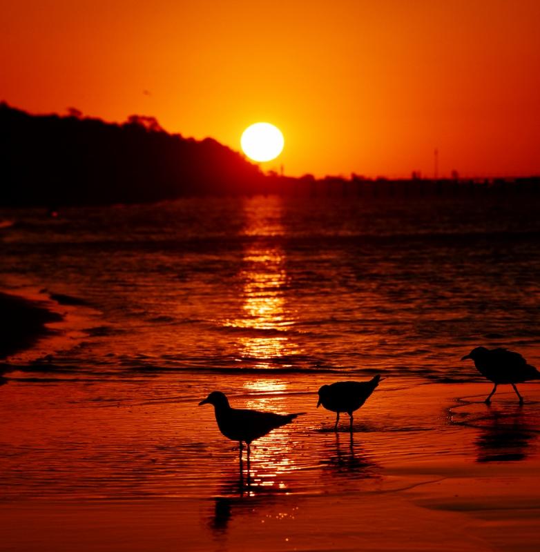 auringonlasku morningtonin niemimaalla
