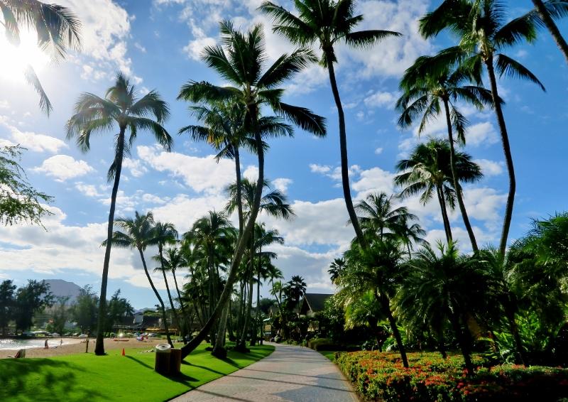 Palmuja Havaijilla