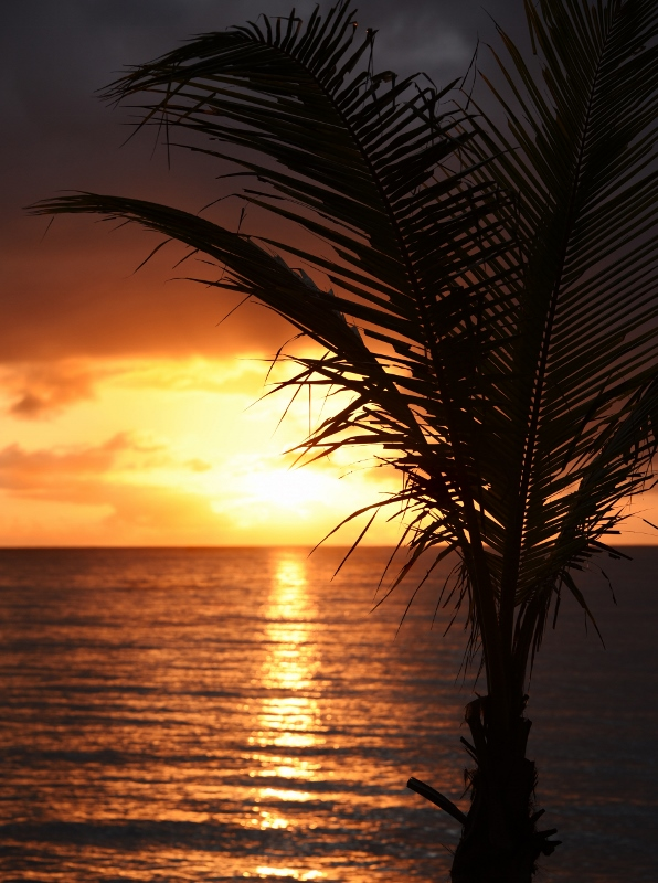 Auringonnousu palmurannalla
