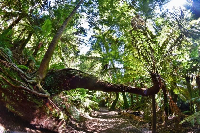 Tarra-Bulgan kansallispuisto Victoriassa