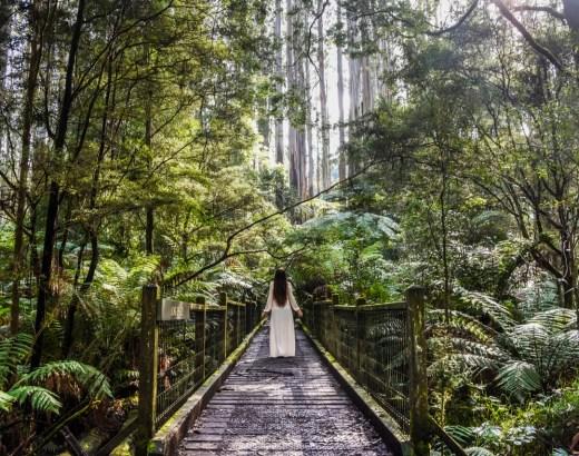 Paivaretki Melbourne | Dandenong Rangesin metsaa