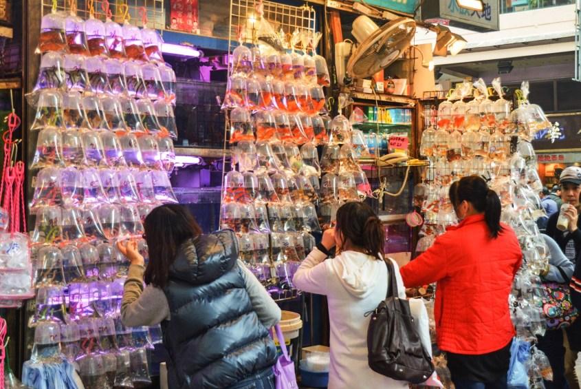 Hongkongin torit