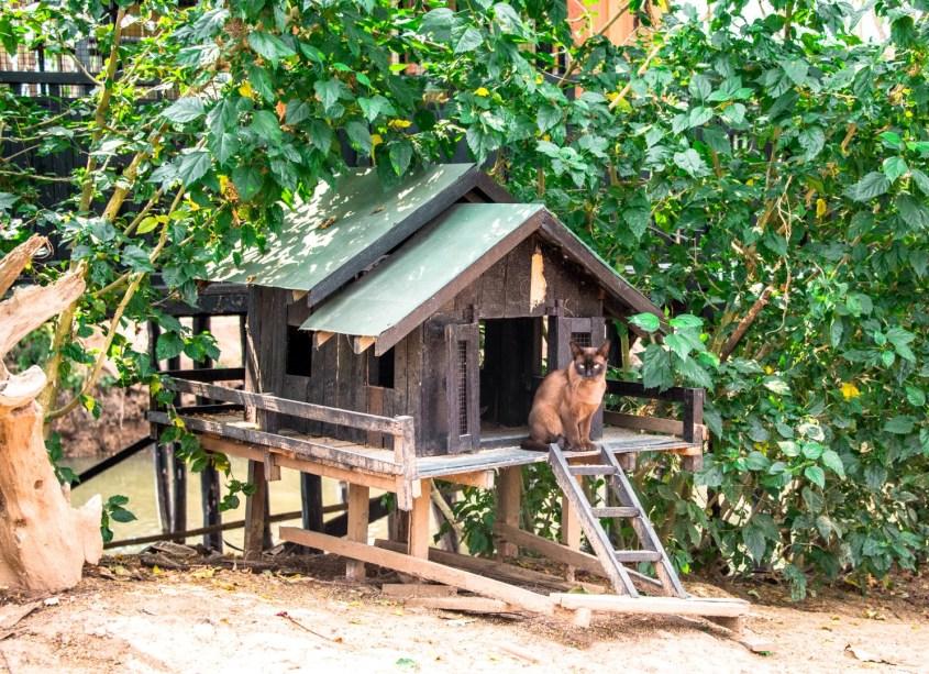 Inle-järvi | Burmalainen kissakylä