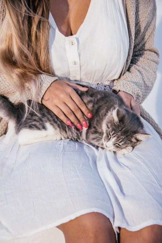 Kreikka Blogi | kreikkalainen kissa