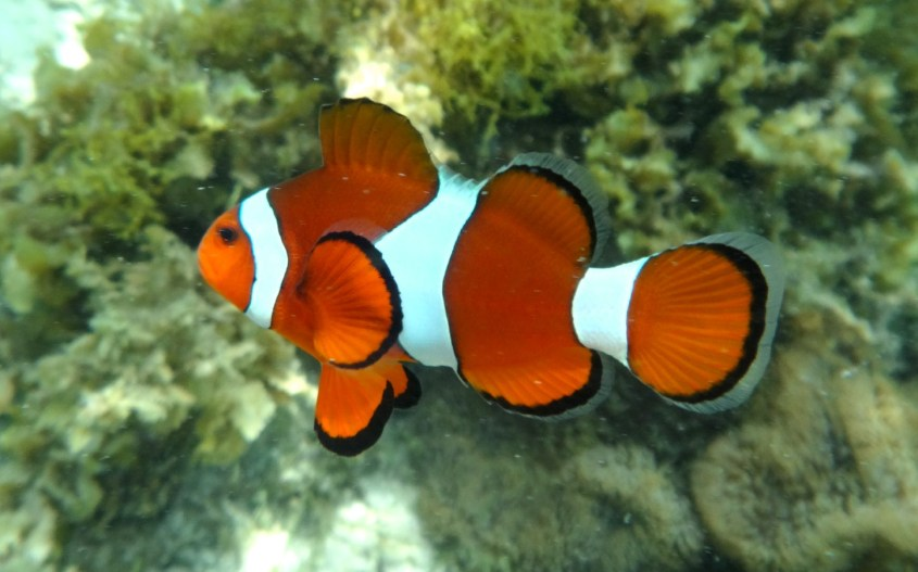 Iso Valliriutta | Nemo