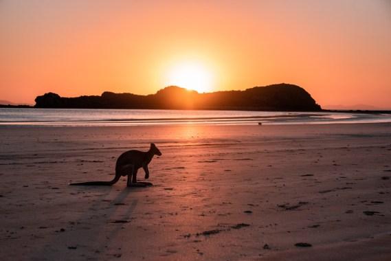 Australia | Vinkit