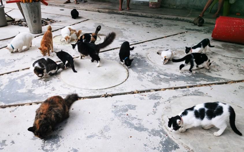 Koh Lanta vinkit | Animal rescue