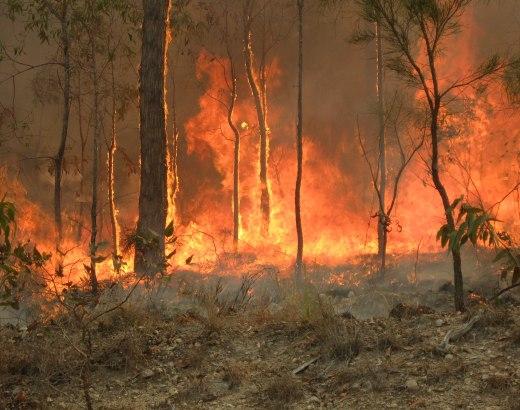 Australia metsäpalot