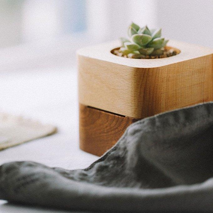 Wood-Music-box-plant