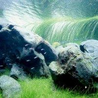 Tipos de acuarios