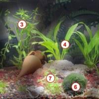 Las plantas de mi acuario.