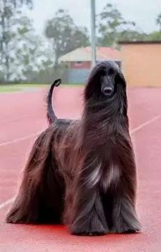 Chien Le Plus Beau Du Monde : chien, monde, Découvrez, Chien, Monde, Paris.maville.com
