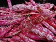 Italian Rose Beans