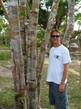 With the Camoflauge Tree