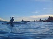 Feeding the Whale Sharks