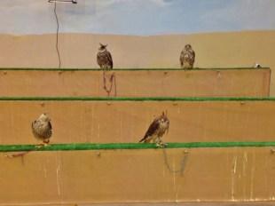 Four Falcons