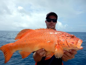 Bar-Cheeked Coral Trout