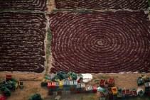 rodekoolveld, luchtfoto, ritme, lijn