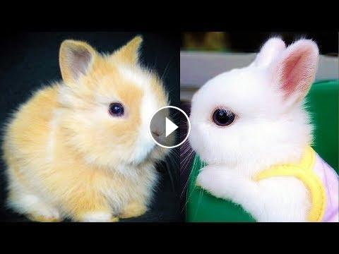 Rabbits Cute Baby Bunnies Funny Rabbit Videos Funny Baby Videos